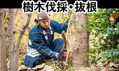 樹木伐採・伐根