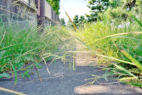 草刈りの目安時期